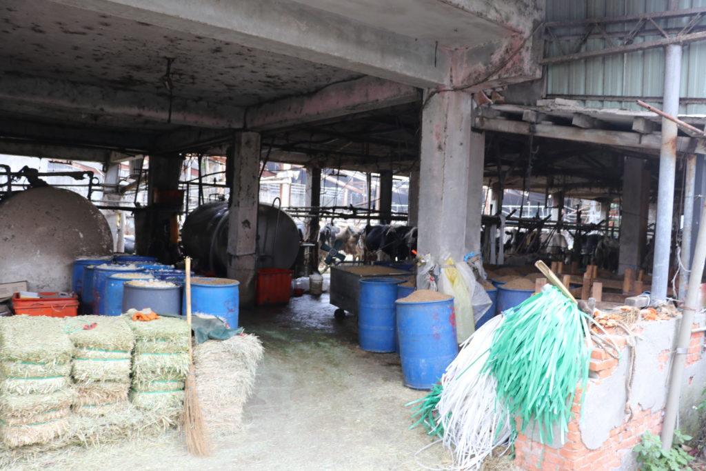 動物福利標章-乳牛